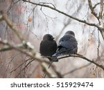 Jackdaw On A Tree