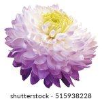white violet  chrysanthemum ... | Shutterstock . vector #515938228