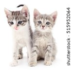Two Small Kittens Isolated On...