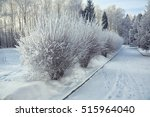 Bushes With Snow And Frost At...