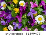 Brightly Colored Spring Flowers