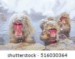 a wild monkey that enters a hot ... | Shutterstock . vector #516030364