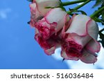 flowers  reflection in pure... | Shutterstock . vector #516036484