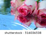flowers  reflection in pure... | Shutterstock . vector #516036538