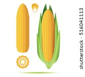 set of ripe corn cobs isolated... | Shutterstock .eps vector #516041113
