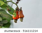 ripening cashew nuts ... | Shutterstock . vector #516111214