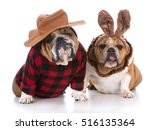 dogs dressed up like a hunter... | Shutterstock . vector #516135364