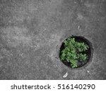 concrete floor   sapling   Shutterstock . vector #516140290