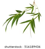 Fresh Bamboo Leaves Border With ...