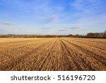 Golden Straw Stubble Field In...