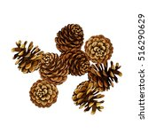 Pine Cone Vector Illustration....