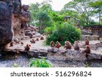 Hamadryad Monkeys Family Are Sitting - Fine Art prints