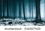 Fog And Snow In Forest