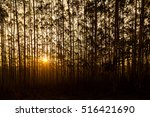 sunset behind a silhouetted row ... | Shutterstock . vector #516421690