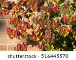 the picturesque russet red... | Shutterstock . vector #516445570