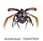 Black Beetles Isolated On Whit...