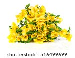yellow freesia isolated on... | Shutterstock . vector #516499699