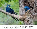 Parakeet Feeding   Beautiful...
