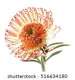 beautiful exotic flower... | Shutterstock . vector #516634180