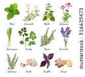 set with organic herbs objects... | Shutterstock .eps vector #516635473