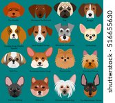 small dog faces set with breeds ... | Shutterstock .eps vector #516655630