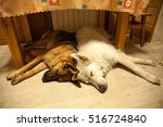 Two Dogs Sleep Together Under...