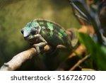 green chameleon in the... | Shutterstock . vector #516726700