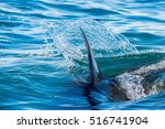shark fin above water. closeup... | Shutterstock . vector #516741904