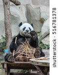 Small photo of Chiang Mai, Thailand - July 23, 2011: Giant Panda, Ailuropoda melanoleuca, eating bamboo in Chiang Mai Zoo, the first and only zoo in Northern Thailand.