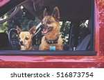 small chihuahua and a pug mix... | Shutterstock . vector #516873754