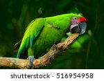 Green parrot great green macaw  ...