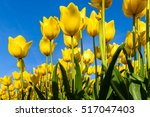 Small photo of Beautiful bouquet of tulips. colorful tulips. tulips in spring sun. tulip in the field