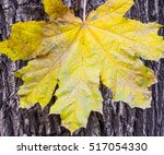 Large And Small Maple Leaf