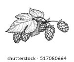 hand drawn vector illustration... | Shutterstock .eps vector #517080664