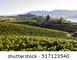 Vineyard In Penticton And...