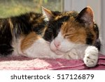 Calico Cat Asleep In Front Of ...