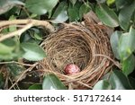 A Robin's Nest With One Egg