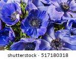 Closeup Of A Blue And Purple...
