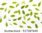 Green Leaf On White Background