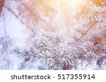 Winter Scene Pine Tree Snow...