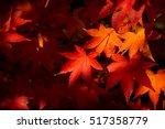 colored autumnal foliage of...