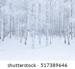 Birch Wood Forest Covered In...