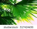 green palm leaves  | Shutterstock . vector #517424650