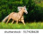 Beautiful Palomino Horse With...