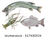 set with can er and fish.... | Shutterstock . vector #517430524