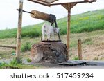 countryside. goat near the well. | Shutterstock . vector #517459234