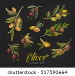 set of olive branches or tree... | Shutterstock .eps vector #517590664