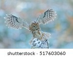Flying Owl In The Snowy Forest...