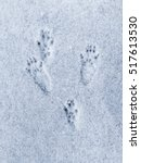 squirrel tracks in the snow | Shutterstock . vector #517613530