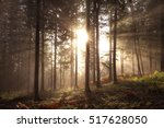 magical sunlight in foggy... | Shutterstock . vector #517628050